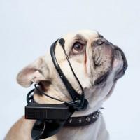 leer-mente-canina