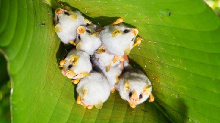 murciélagos bebés